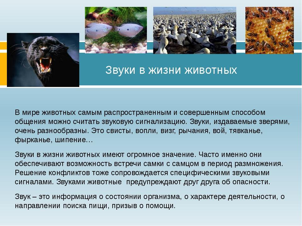 В мире животных самым распространенным и совершенным способом общения можно с...