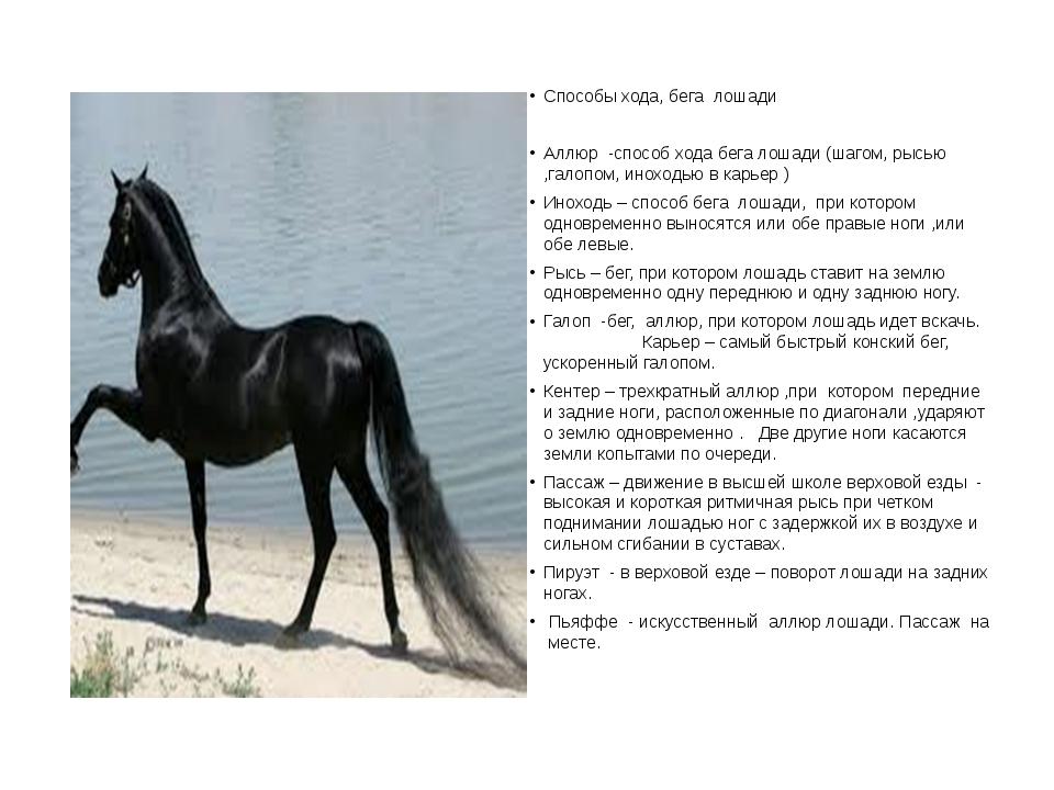 Способы хода, бега  лошади Способы хода, бега  лошади Аллюр  -способ хода б...