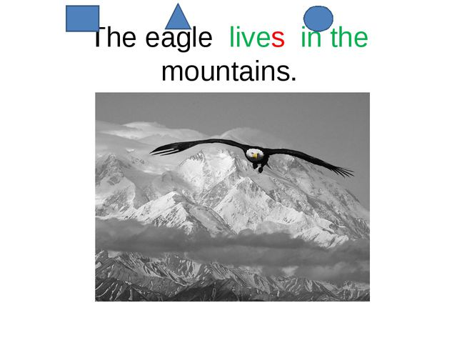 The eagle lives in the mountains.