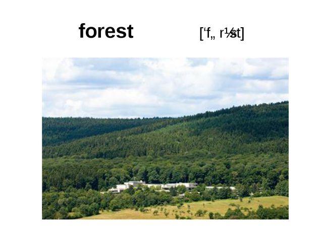 forest ['fɒrɪst]