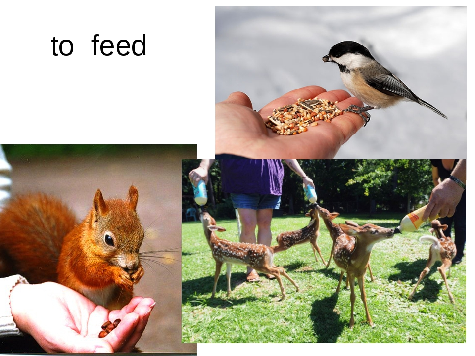 to feed
