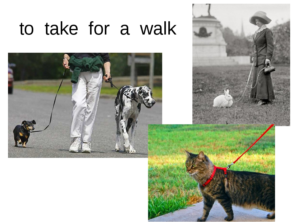 to take for a walk