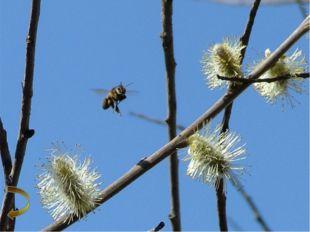 Фотографии пасек Пасека расположена в лесостепной зоне Венгеровского района.
