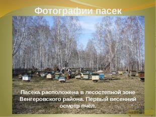 Кормовая база складывается из естественных медоносов осиново – березовых лесо