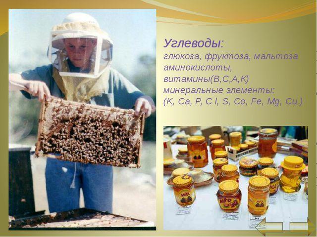 Состав пчелиной семьи матка трутень рабочие пчелы