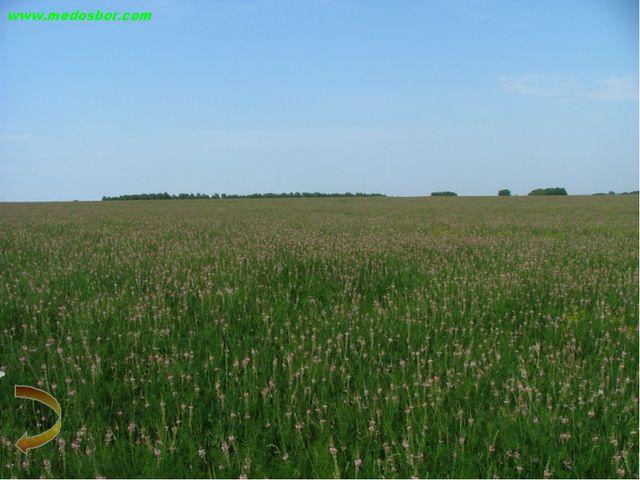 ВЫВОДЫ: 1)Медоносная база Венгеровского района достаточна для развития любите...
