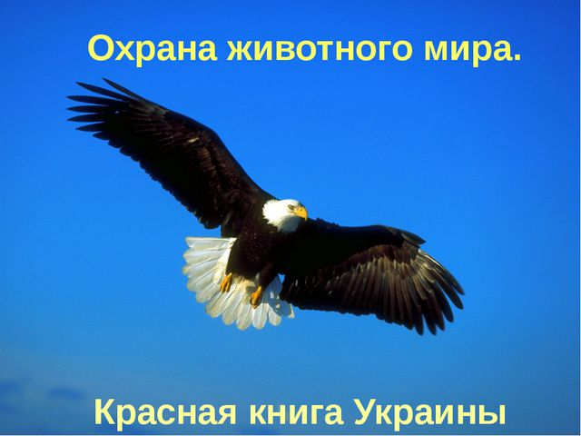 Охрана животного мира. Красная книга Украины