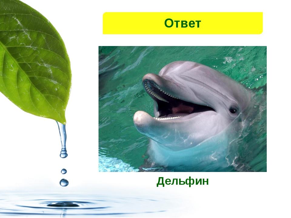 Дельфин Ответ