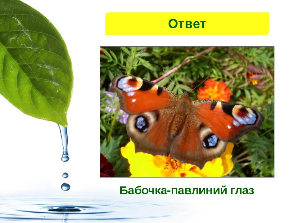 Ответ Бабочка-павлиний глаз