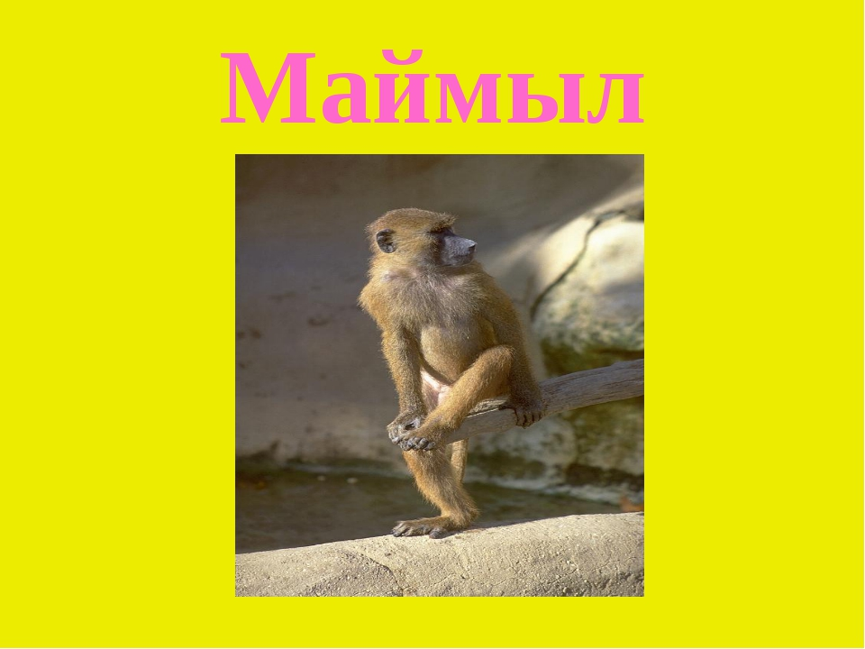 Маймыл