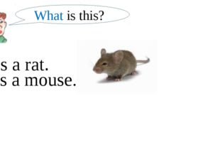 What is this? It is a mouse. It is a rat.