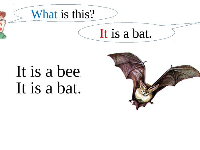 What is this? It is a bat. It is a bee. It is a bat.