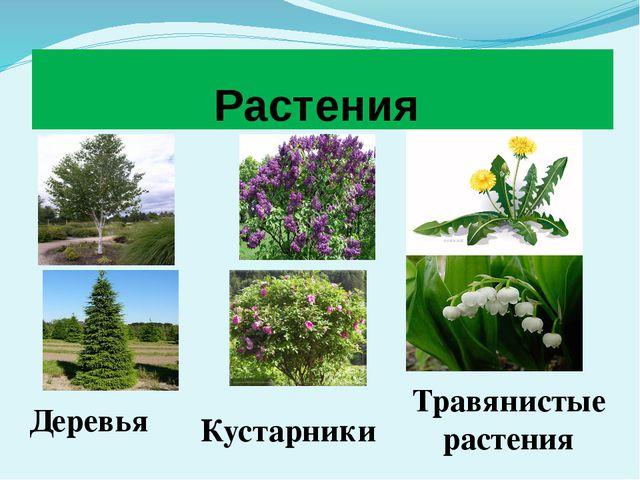 Растения Деревья Кустарники Травянистые растения