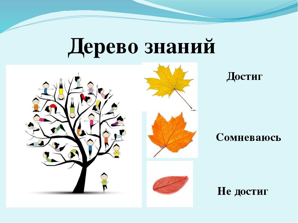 Дерево знаний Достиг Сомневаюсь Не достиг