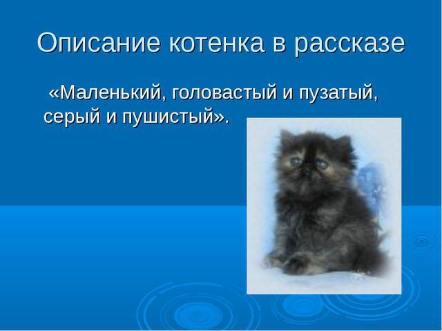 Описание котенка в рассказе «Маленький, головастый и пузатый, серый и пушисты...