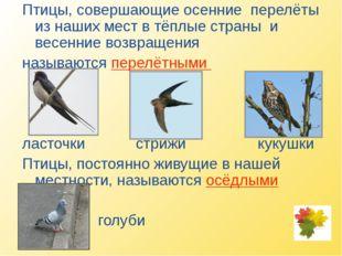 Птицы, совершающие осенние перелёты из наших мест в тёплые страны и весенние