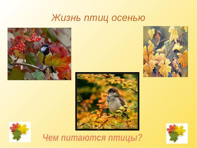 Жизнь птиц осенью Чем питаются птицы?