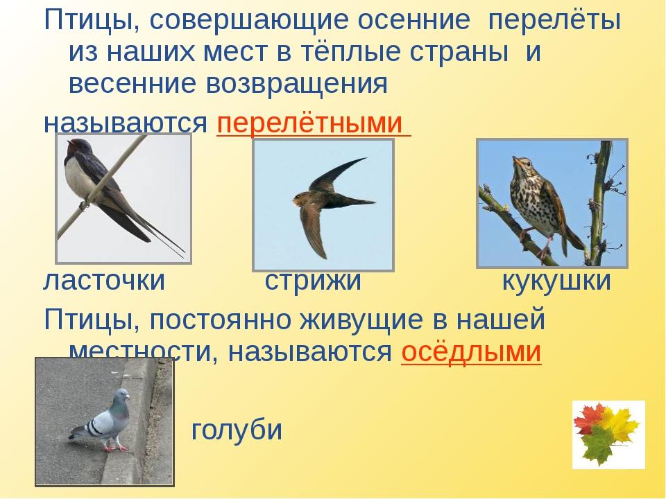 Птицы, совершающие осенние перелёты из наших мест в тёплые страны и весенние...