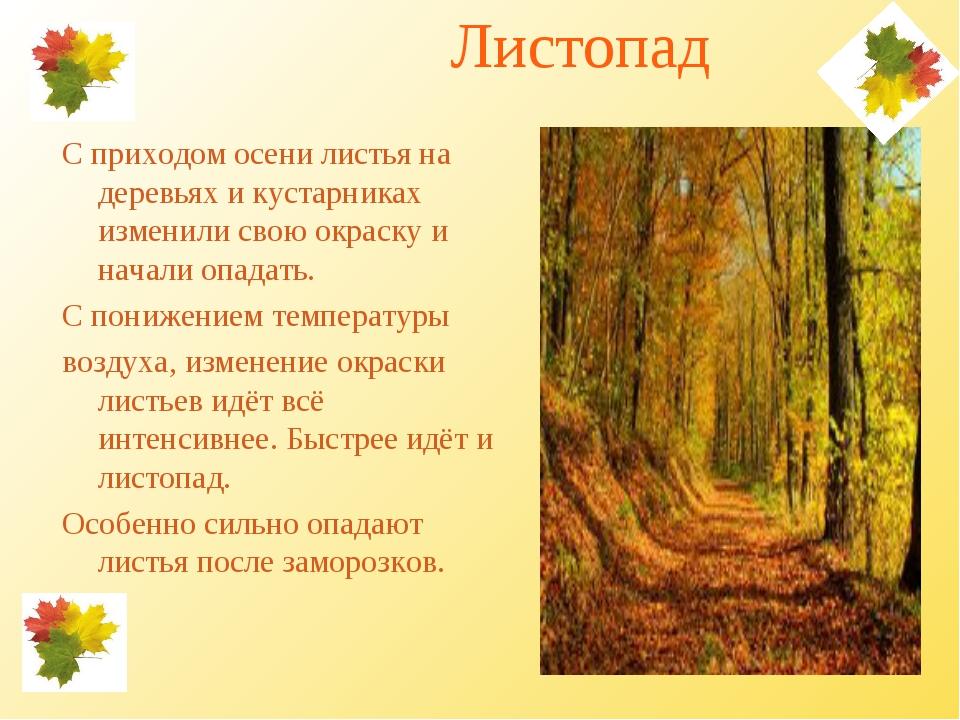Почему осенью листья с деревьев опадают листья