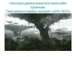 Некоторые деревья вырастали необычайно огромными. Такие деревья индийцы назыв