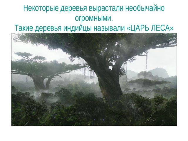 Некоторые деревья вырастали необычайно огромными. Такие деревья индийцы назыв...