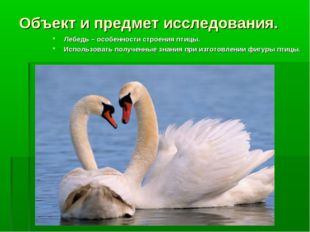 Объект и предмет исследования. Лебедь – особенности строения птицы. Использов