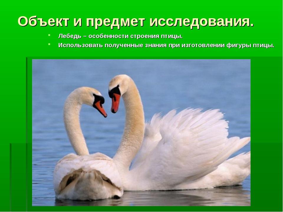 Объект и предмет исследования. Лебедь – особенности строения птицы. Использов...