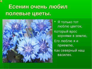 Есенин очень любил полевые цветы. . Я только тот люблю цветок, Который врос