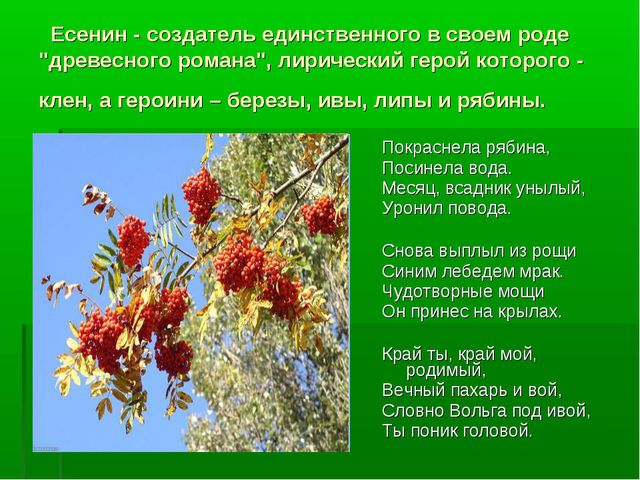 """Есенин - создатель единственного в своем роде """"древесного романа"""", лирически..."""