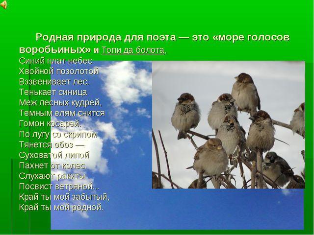 Родная природа для поэта — это «море голосов воробьиных» и Топи да болота, С...