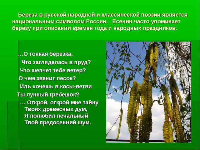 Береза в русской народной и классической поэзии является национальным символ...