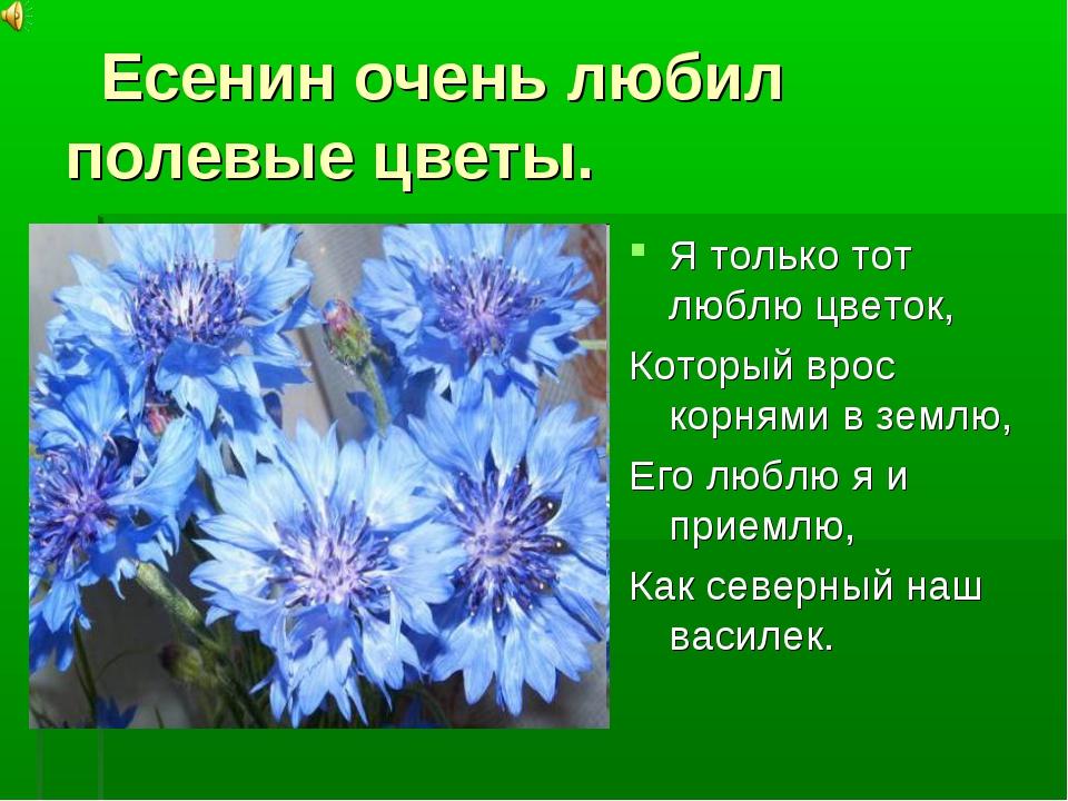 Есенин очень любил полевые цветы. . Я только тот люблю цветок, Который врос...