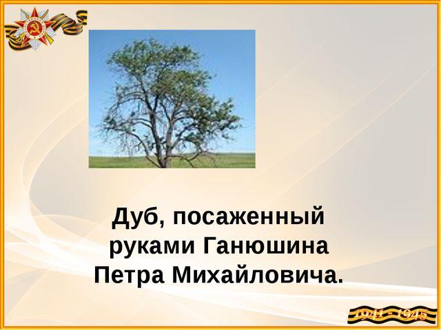 Дуб, посаженный руками Ганюшина Петра Михайловича.