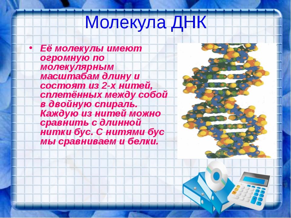 Молекула ДНК Её молекулы имеют огромную по молекулярным масштабам длину и сос...