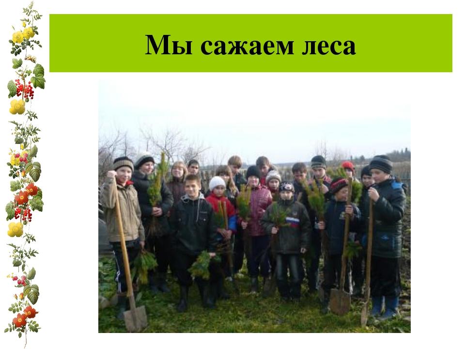 Мы сажаем леса