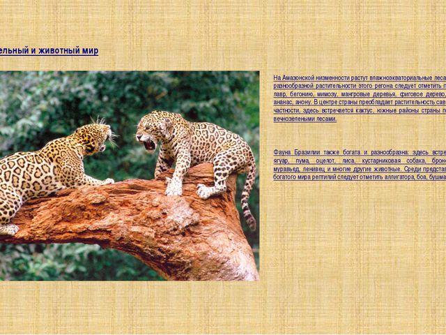 Растительный и животный мир На Амазонской низменности растут влажноэкваториал...