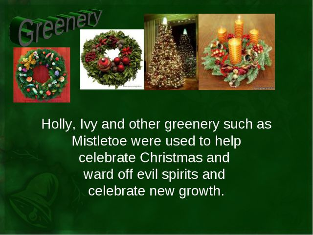 Holly, Ivy and other greenery such as Mistletoe were used to help celebrate C...