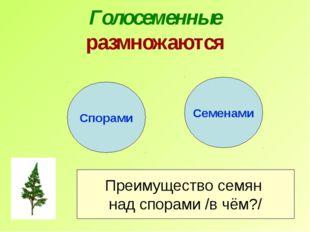 Голосеменные размножаются Спорами Семенами Преимущество семян над спорами /в