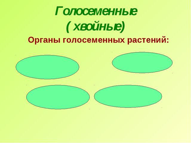 Голосеменные ( хвойные) Органы голосеменных растений: