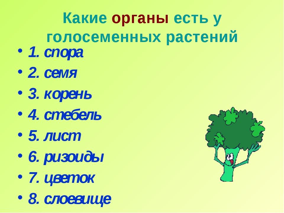 Какие органы есть у голосеменных растений 1. спора 2. семя 3. корень 4. стебе...