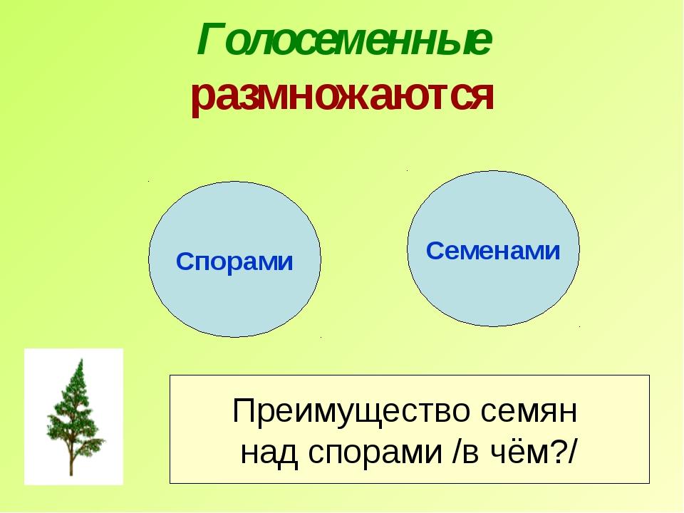 Голосеменные размножаются Спорами Семенами Преимущество семян над спорами /в...