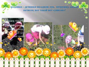 Огородники – детишки посадили лук, петрушку, кабачок и патисон, вот такой вот