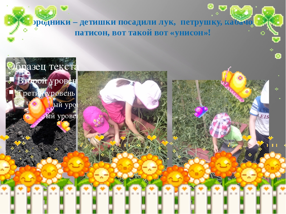 Огородники – детишки посадили лук, петрушку, кабачок и патисон, вот такой вот...