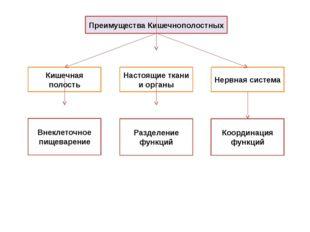 Преимущества Кишечнополостных Кишечная полость Настоящие ткани и органы Нервн