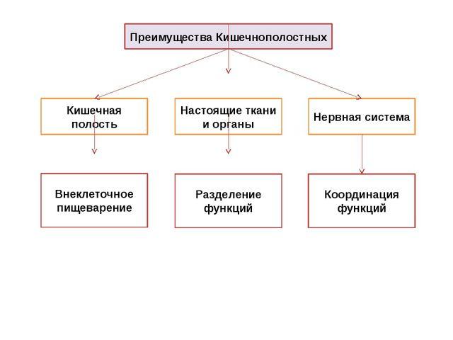 Преимущества Кишечнополостных Кишечная полость Настоящие ткани и органы Нервн...