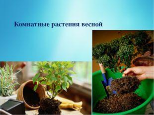 Комнатные растения весной
