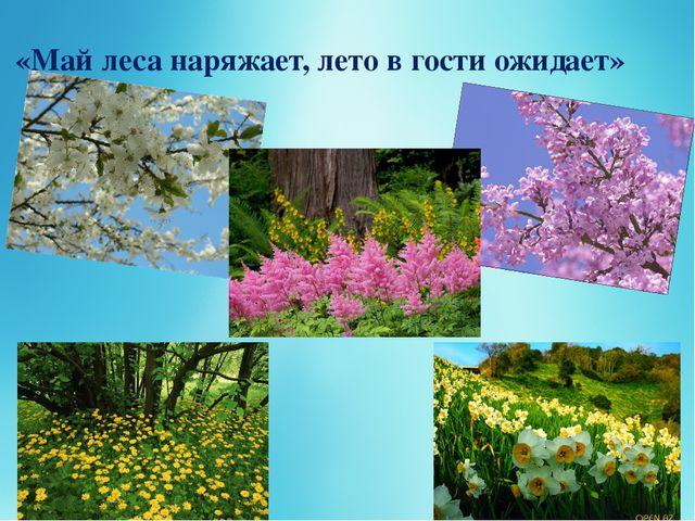 «Май леса наряжает, лето в гости ожидает»