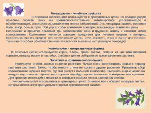 Колокольчик - лечебные свойства В основном колокольчики используются в декора