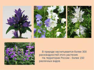 В природе насчитывается более 300 разновидностей этого растения. На территор