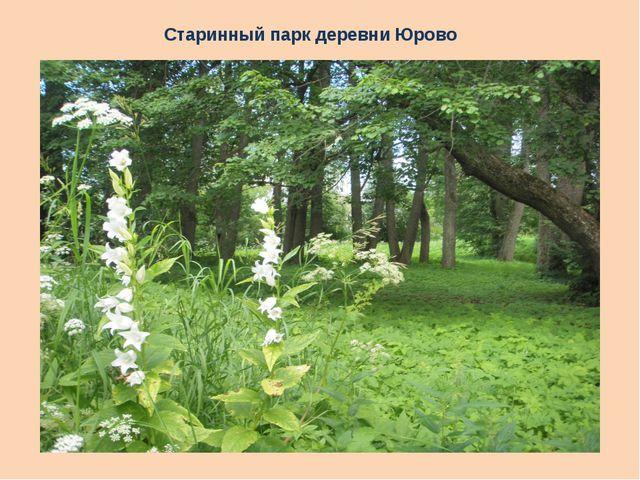 Старинный парк деревни Юрово